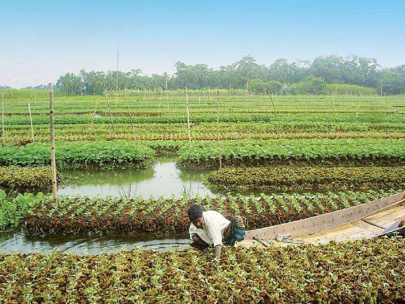 Wetland farming (image credit- Google)