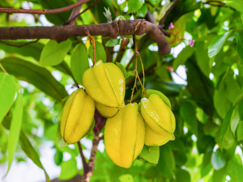 Star Fruit (Image Credit - Google)