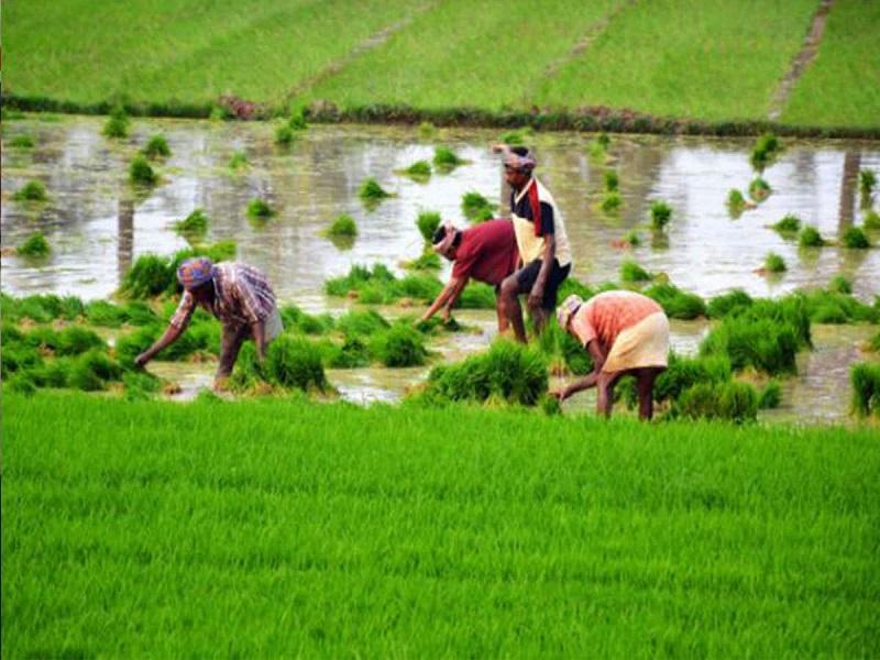 Post harvest solution (image credit- Google)