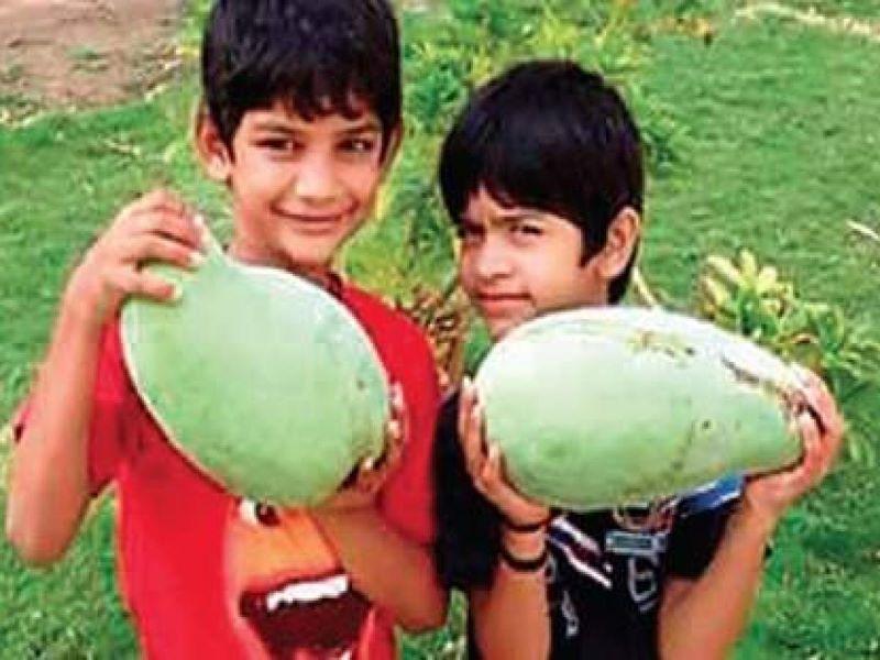 Noorjahan mango