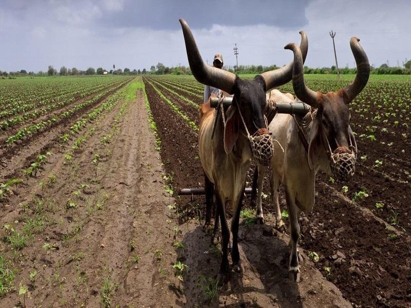 Sustainable Farming (Image Credit - Google)