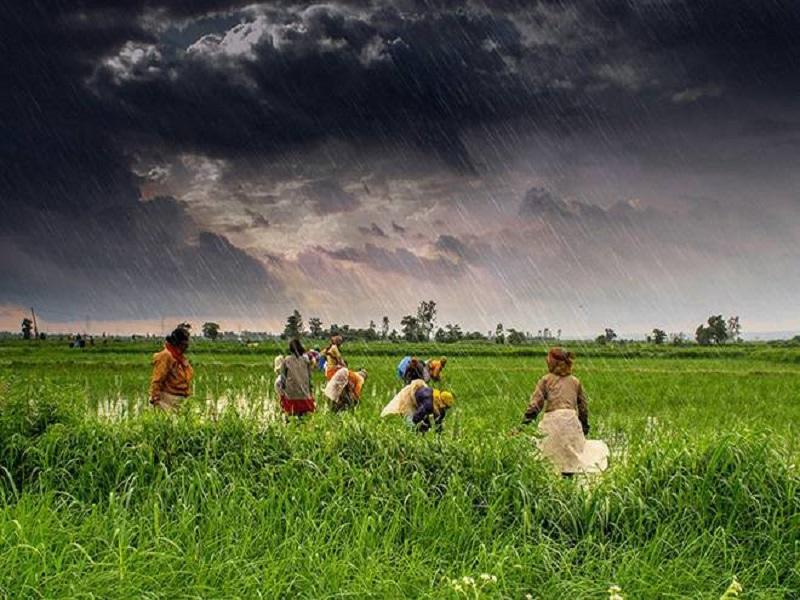 Monsoon Crop Care (Image Credit - Google)