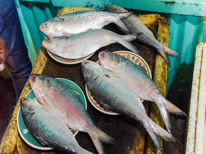 Hilsa fish (image credit- Google)