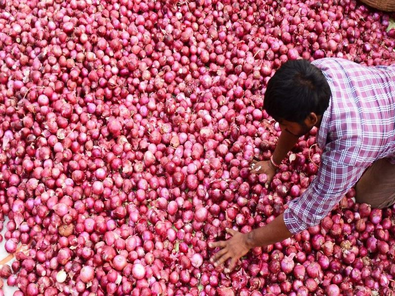 Onion Production increases in this year