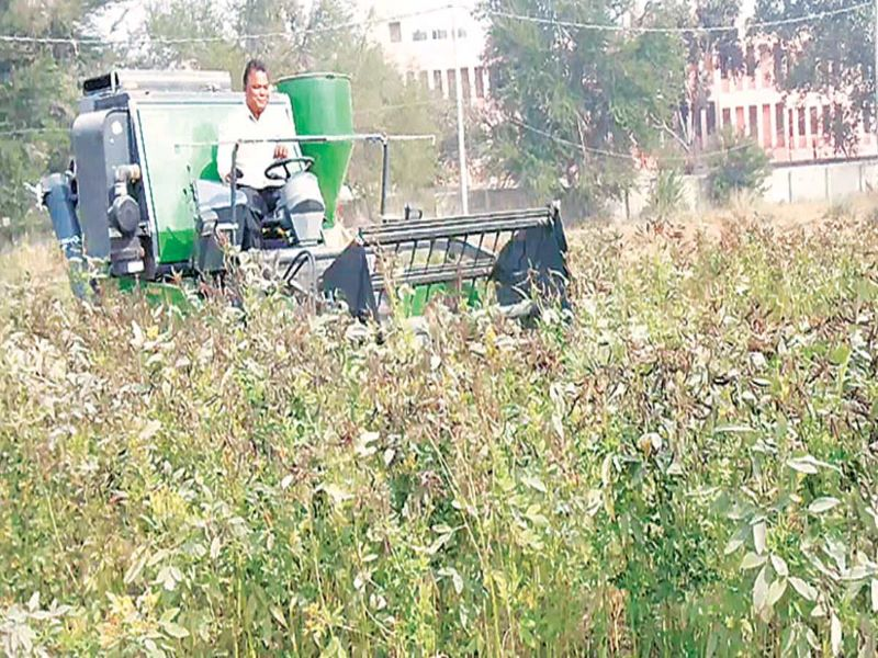 Arahar Dal Farming