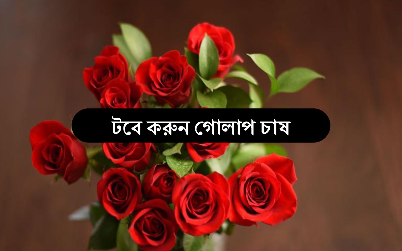 Indoor Rose Cultivation টবে গোলাপ চাষের সহজতম পদ্ধতি