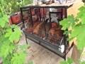 Terrace Poultry Farming:  জেনে নিন ছাদে মুরগি পালন করার সহজ পদ্ধতি