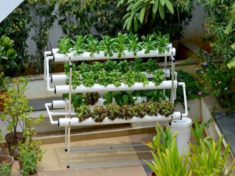 Hydroponics farming (image credit- Google)