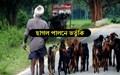 Goat rearing subsidy: ছাগল পালনে ভর্তুকি লাভ