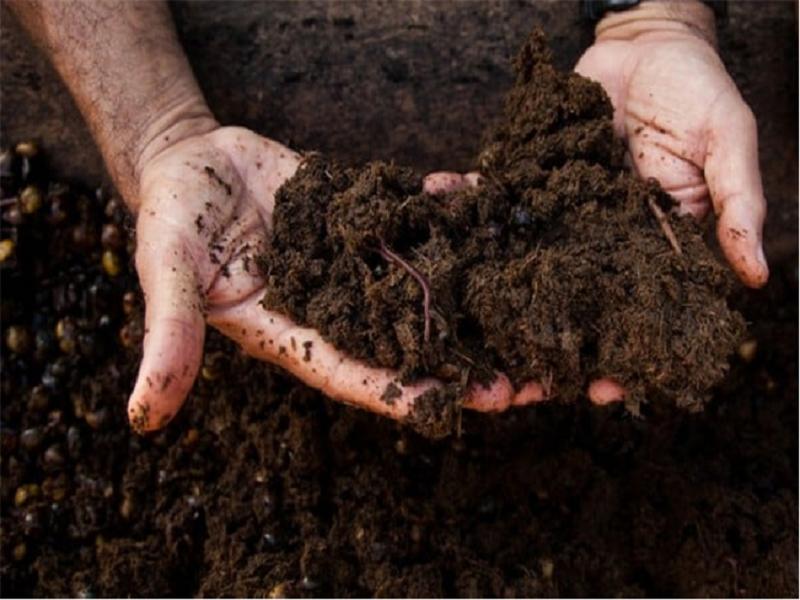 Organic fertilizer (Image Credit - Google)
