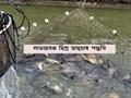 Mixed Fish Farming - কোন কোন মাছের মিশ্রচাষ আপনাকে দেবে দ্বিগুণ লাভ, জেনে নিন কি বলছেন মৎস্য বিশেষজ্ঞ সুমন কুমার সাহু