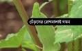 Diseases management in okra: বর্ষায় ঢেঁড়স গাছের রোগ দমনের প্রতিকার শিখে নিন