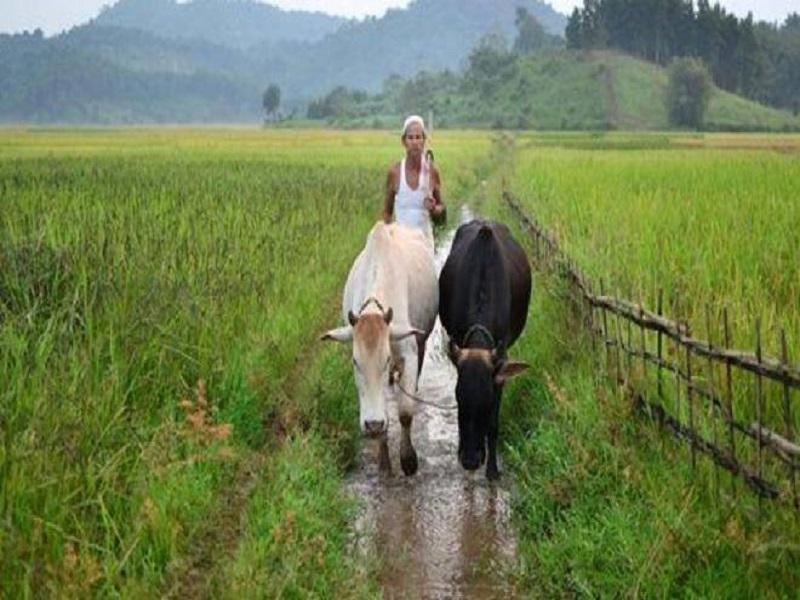 Farmers get gumboots (image credit- Google)