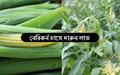 Baby Corn Farming: জেনে নিন সহজ উপায়ে বেবিকর্ন চাষ পদ্ধতি