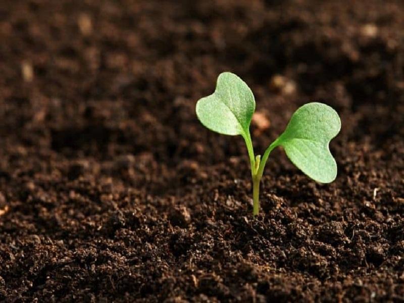 Soil fertility (image credit- Google)