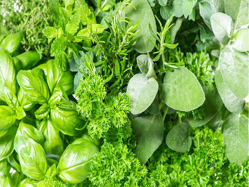 Medicinal Plant Farming (Image Credit - Google)
