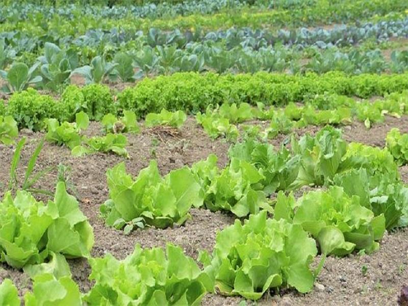 Vegetable calendar (image credit- Google)
