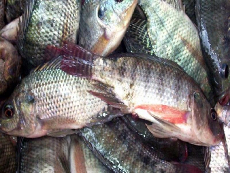 Fish farming management (image credit- Google)