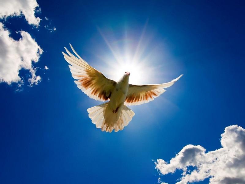 Pigeon Rearing