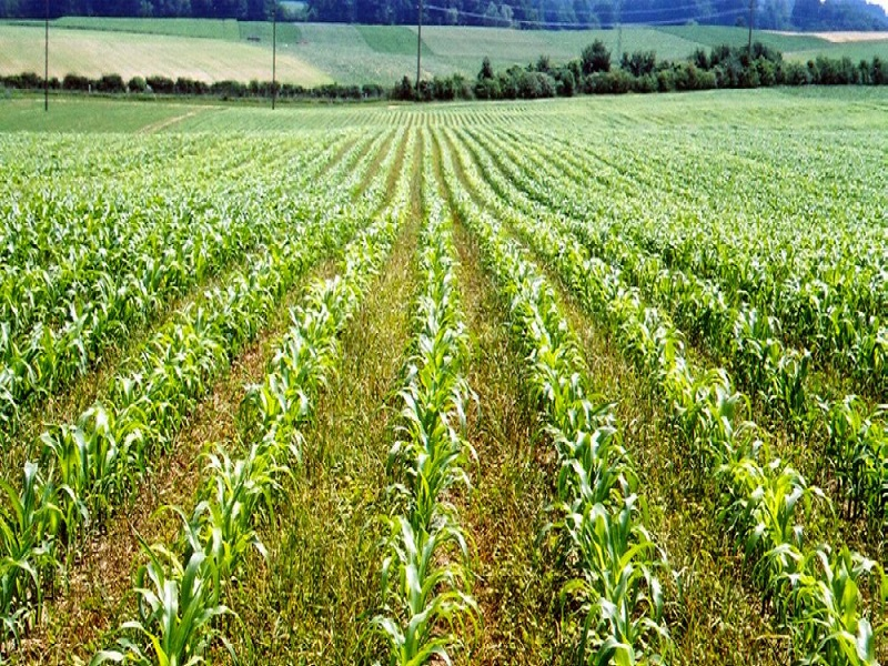 Farming (image credit- Google)
