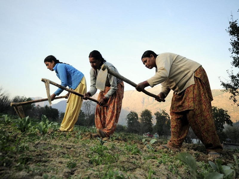 Women choose agricultural education (image credit- Google)