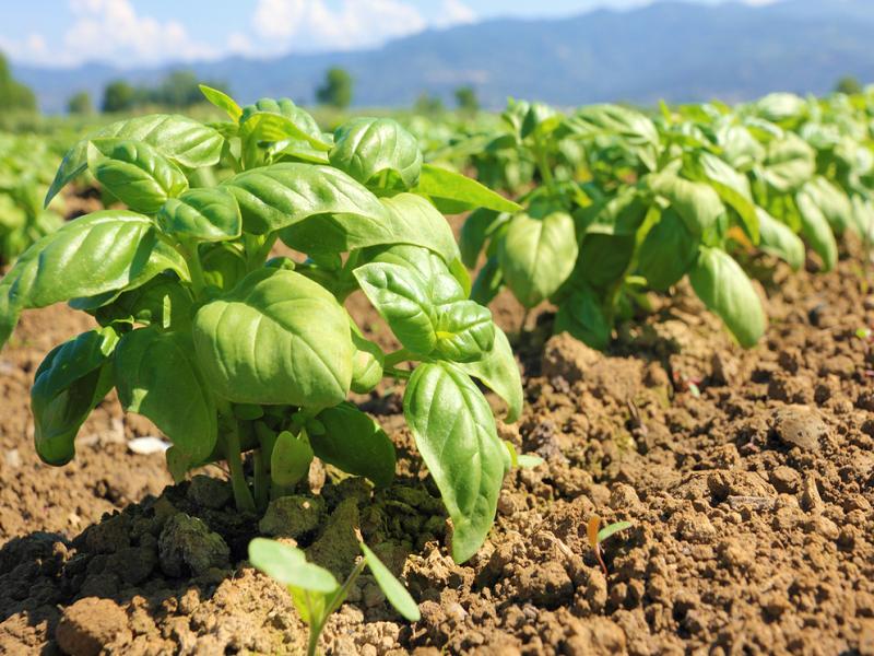 Successful farming ideas (image credit- Google)