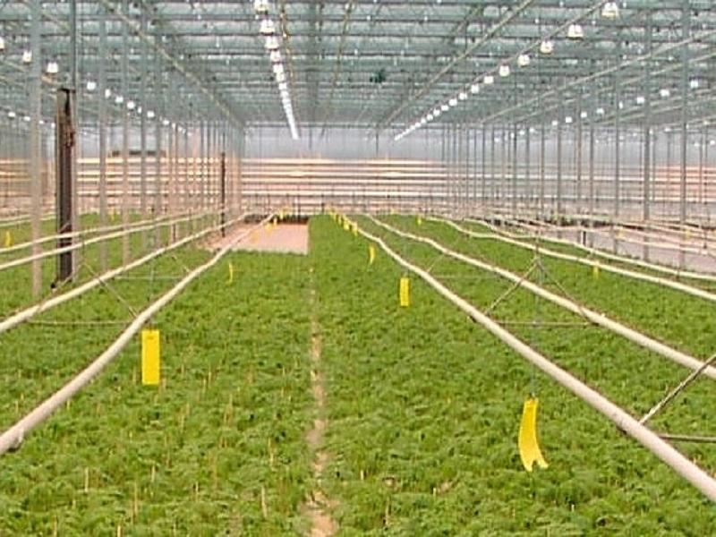 Green house farming (Image Credit- Google)