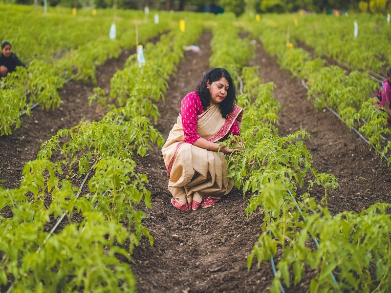 Organic Farming Method (Image Credit - Google)