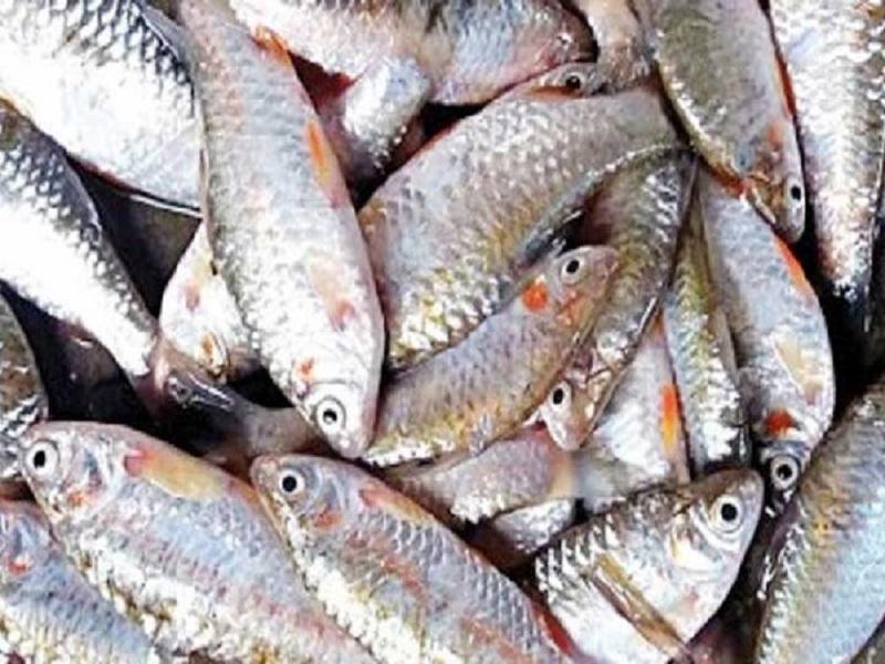 Puti fish (image credit- Google)