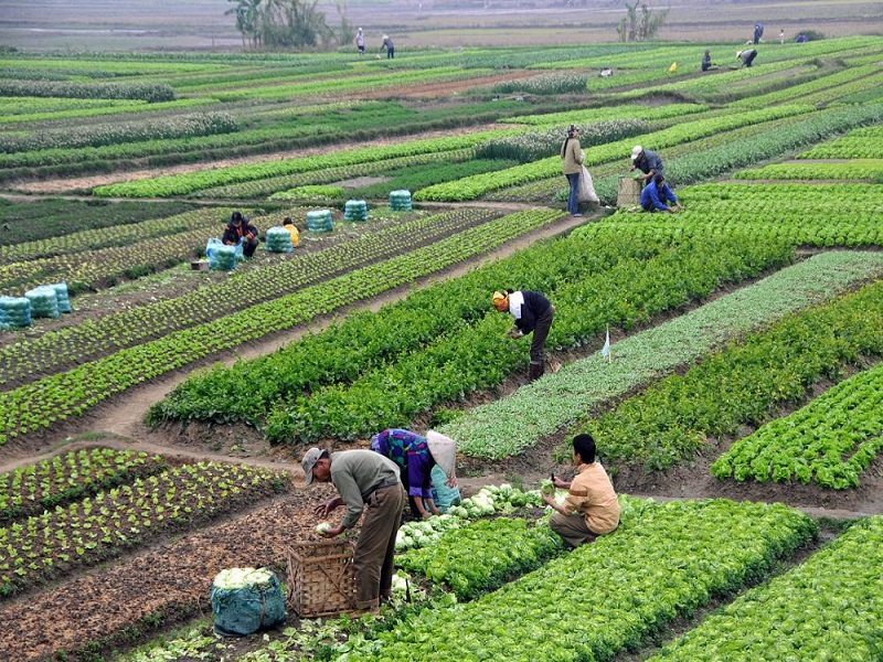 Agriculture (image credit- Google)