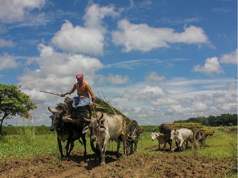 Crop Care (Image Credit - Google)