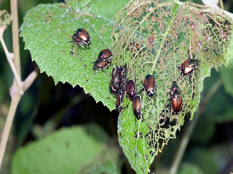 Pests management (image credit- Google)