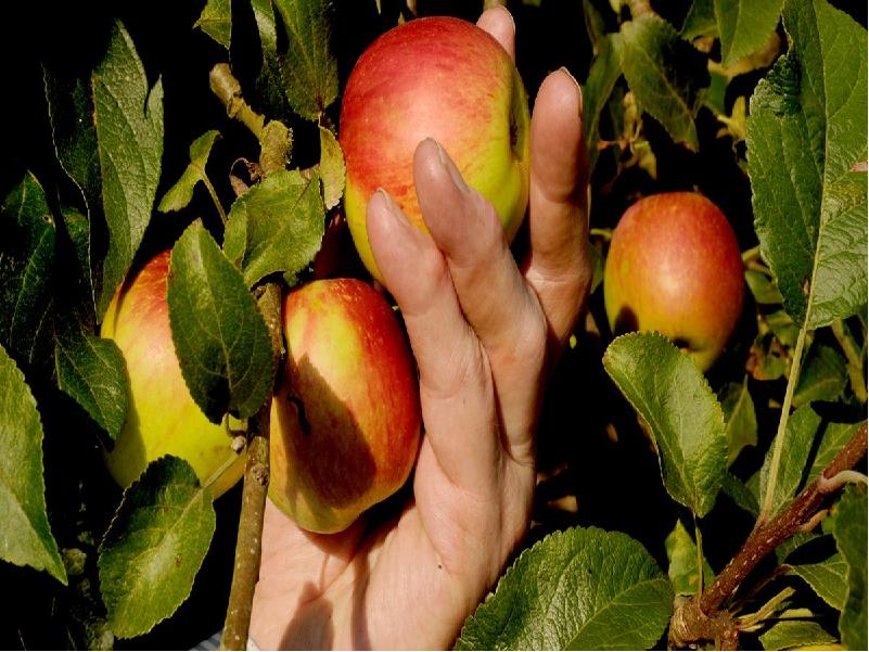 Orchard Garden (Image Credit - Google)