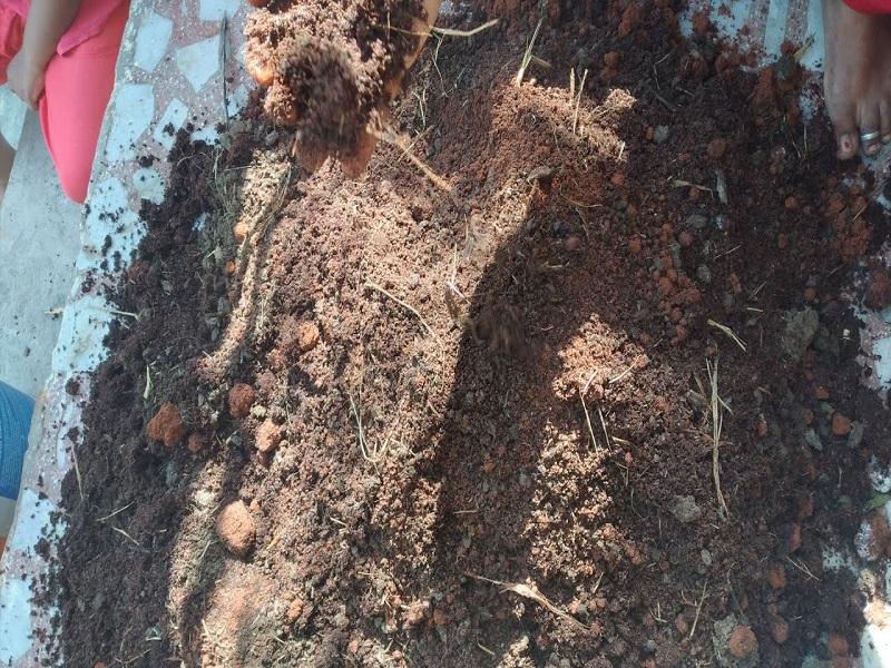 Soil for rooftop (image credit- google)