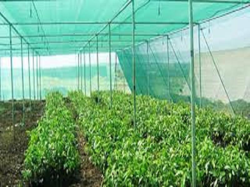 Shade net farming (image credit- Google)
