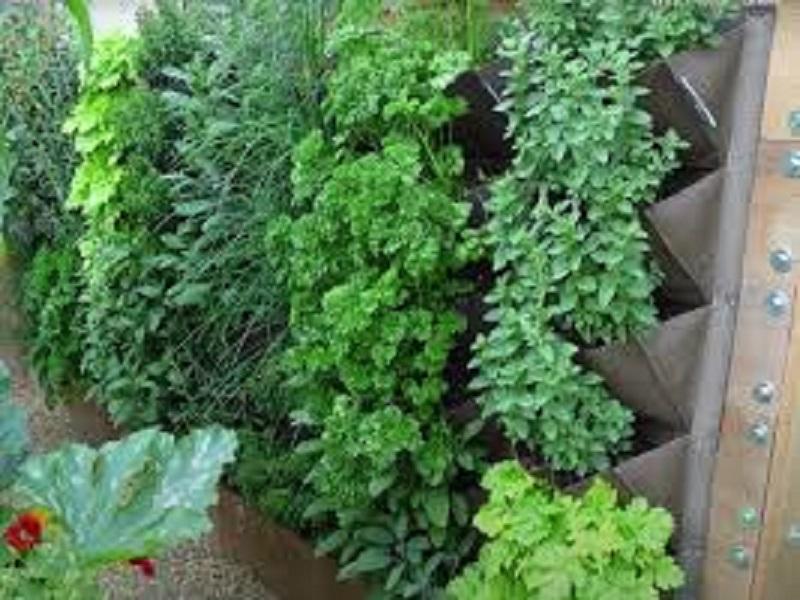 Vertical garden (image credit- Google)