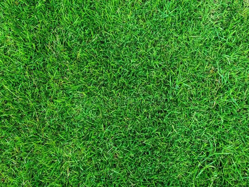 Green grass (image credit- Google)