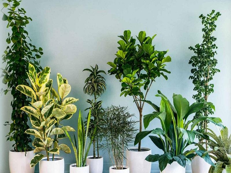 Indoor plants (image credit- Google)