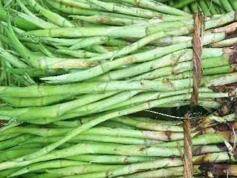 Kachur lati farming (image credit- Google)