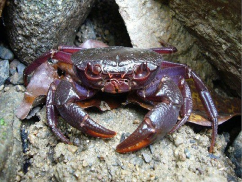 Crab farming (Image Credit - Google)