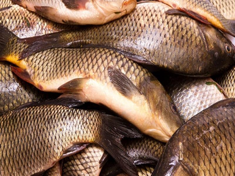 Jayanti rohu fish (image credit- Google)