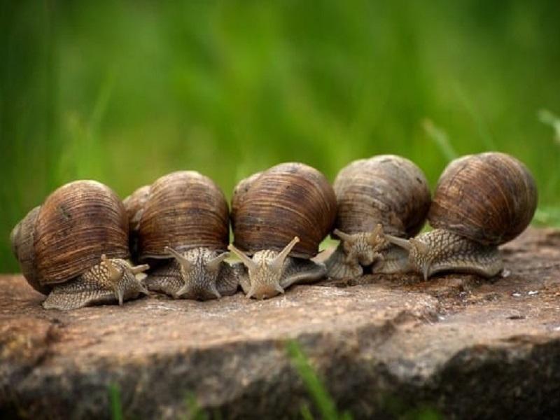 Snails farming (image credit- Google)