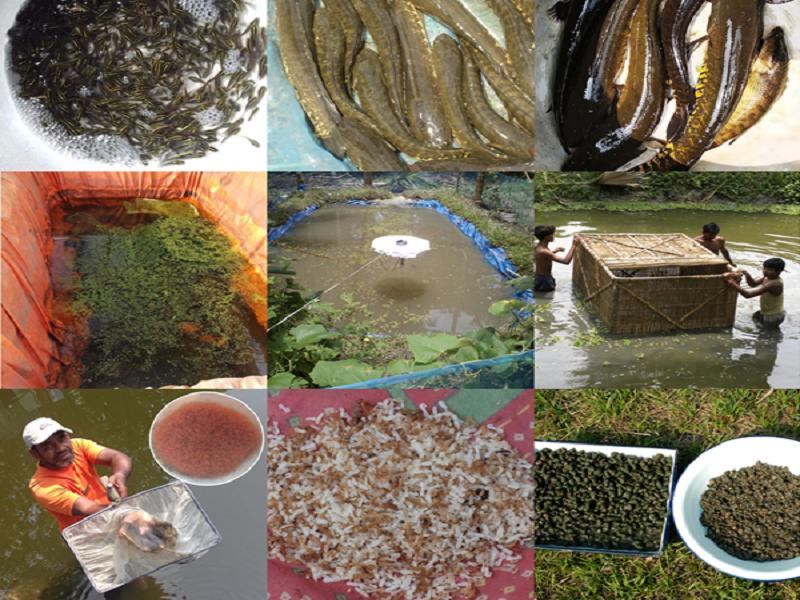 Sole fish (Image Credit - Google)