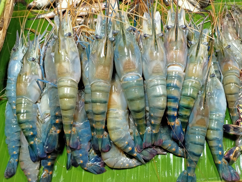 Shrimp disease management (image credit- Google)