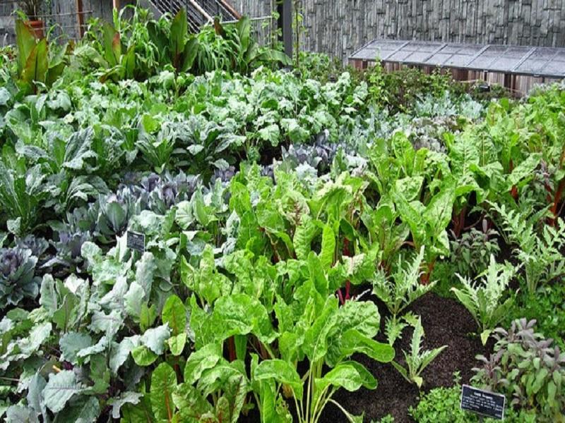 Medicinal plants (image credit- Google)