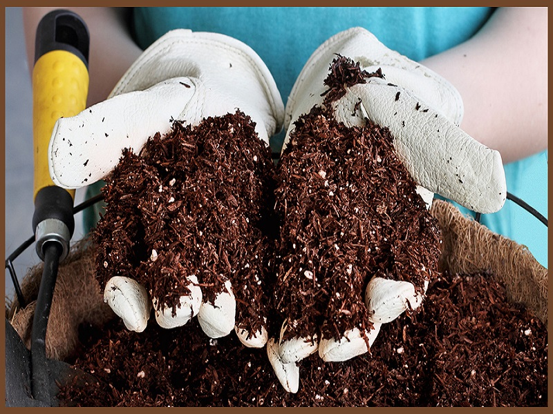 Importance of coco peat (image credit- Google)