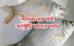 Thai Sharpunti fish farming: কিভাবে করবেন থাই সরপুঁটি মাছের চাষ? শিখে নিন পদ্ধতি