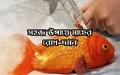 Fish disease treatments: দেখে নিন মাছ চাষের বিভিন্ন রোগের প্রতিকারব্যবস্থা