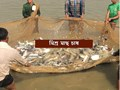 Mixed Fish Farming – মাছের মিশ্র চাষ থেকে কীভাবে বাড়তি আয় করবেন মৎস্যচাষীরা, জেনে নিন মিশ্র মাছ চাষ