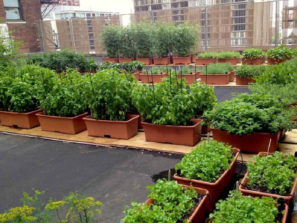 Rooftop farming (Image Credit - Google)